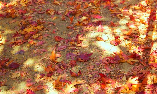 Autumn leaves, ah.