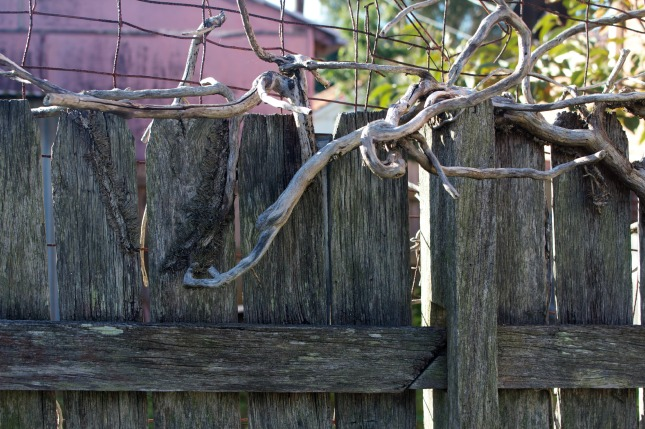 Our back fence with the neighbours 'pink' garden shed in the background.  The old branches are fabulous.
